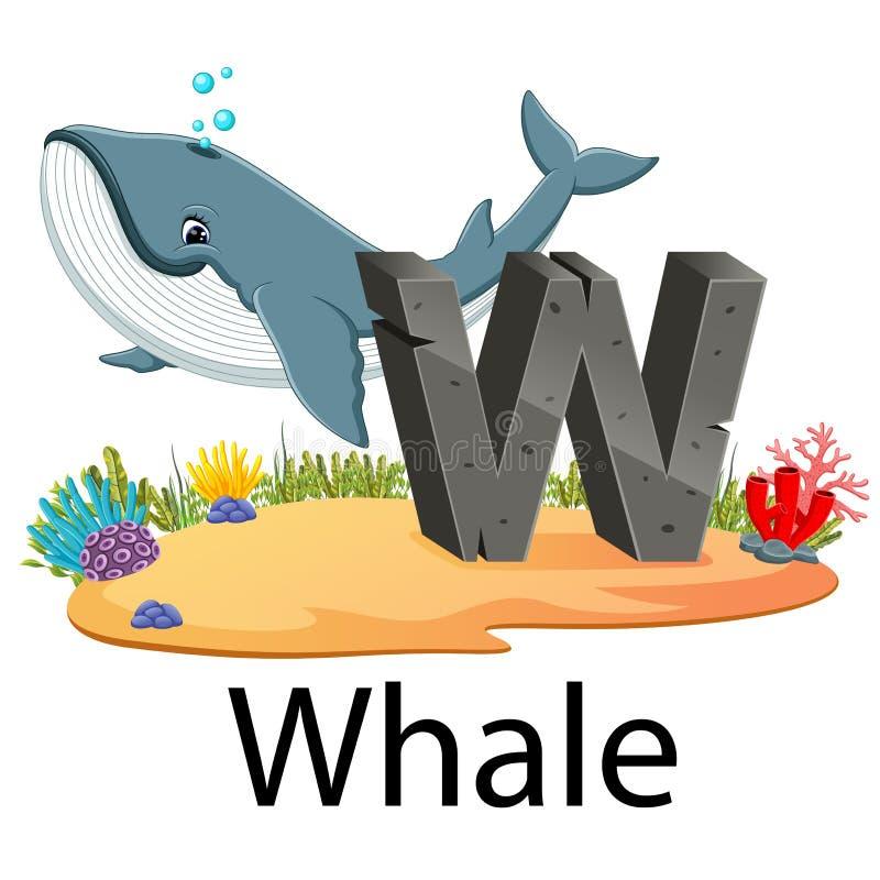 Djurt alfabet W för gullig zoo för val med den bra animeringen vektor illustrationer
