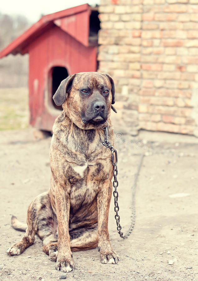 djurt hundskydd arkivbilder