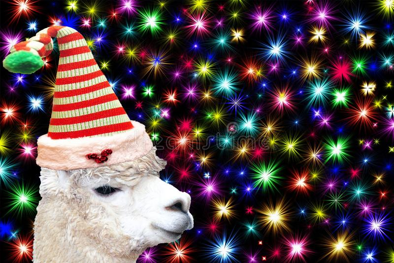 Djurt kort för rolig jul en lama som bär en julälvahatt som isoleras på en svart bakgrund med färgrika stjärnor royaltyfria foton
