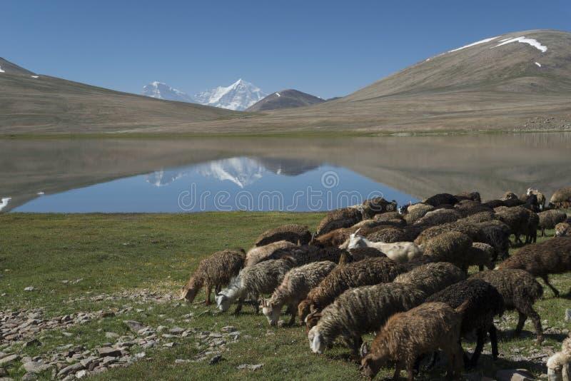 Djurt lantbruk i berg royaltyfri foto