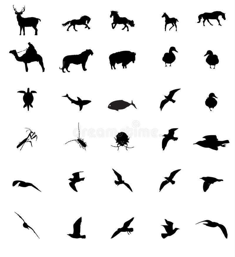 Djurt Silhouttesdjurliv Arkivbilder