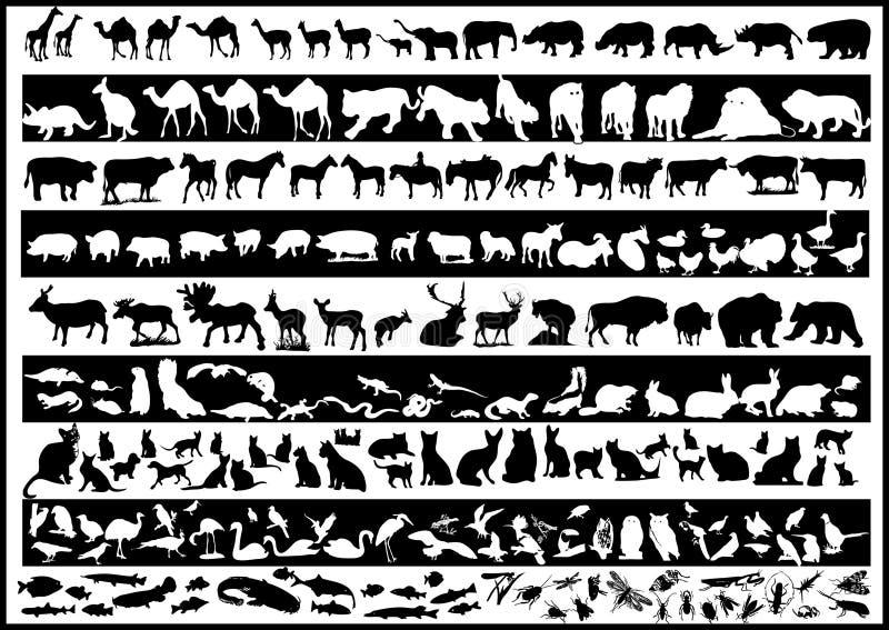 djurvektorer vektor illustrationer