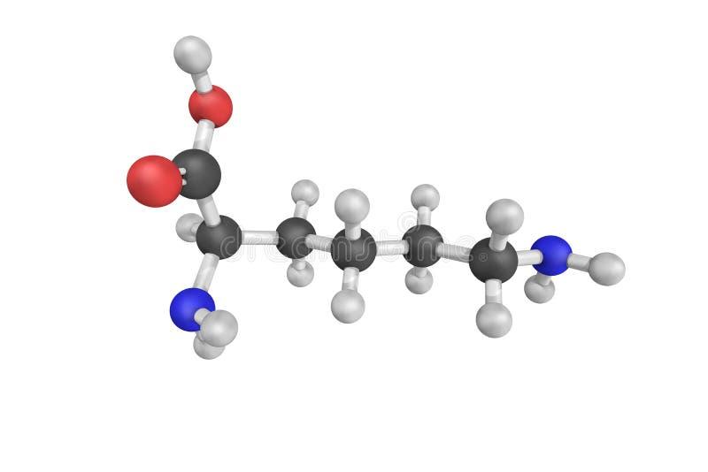 DL-lisina, un substrato del aminomutase della D-lisina 5,6, un enzima t fotografie stock