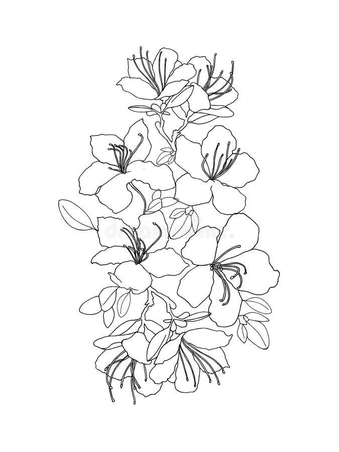Dlack en witte samenstelling van rododendron royalty-vrije illustratie