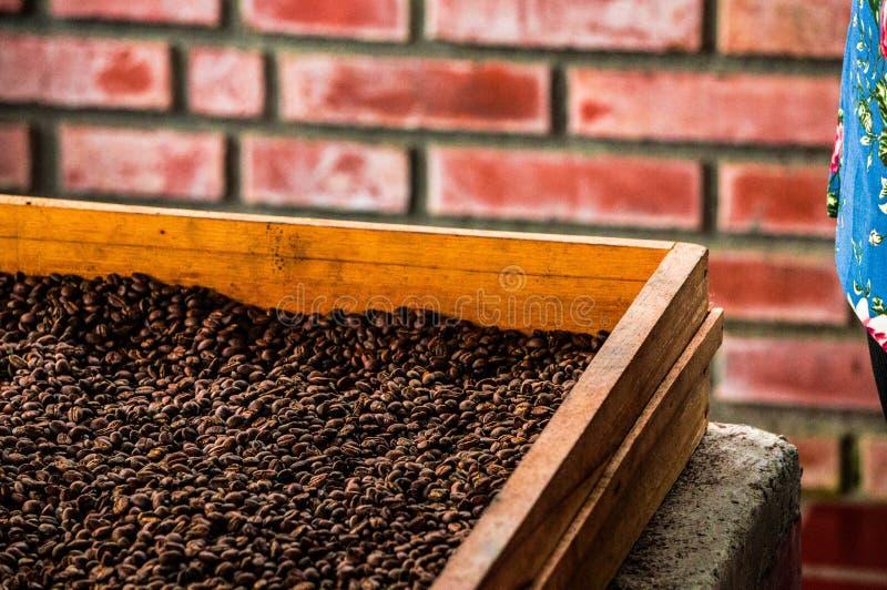 Dlaczego produkować kawę w Kolumbia fotografia stock