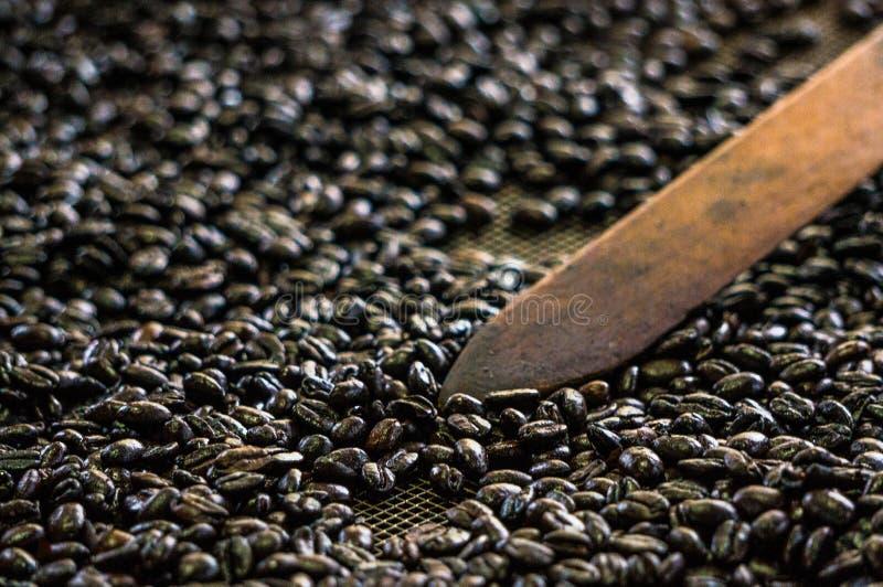 Dlaczego produkować kawę w Kolumbia zdjęcie royalty free