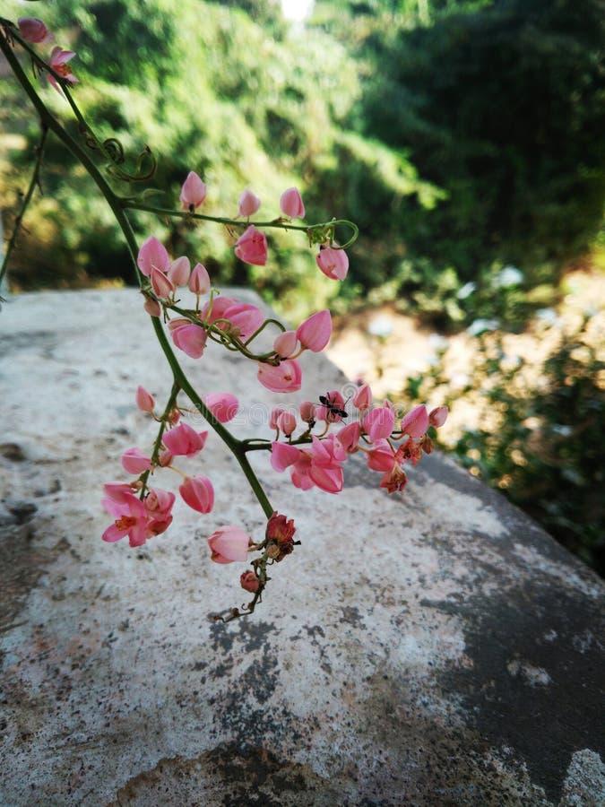 Dlsr de Floro imagem de stock royalty free