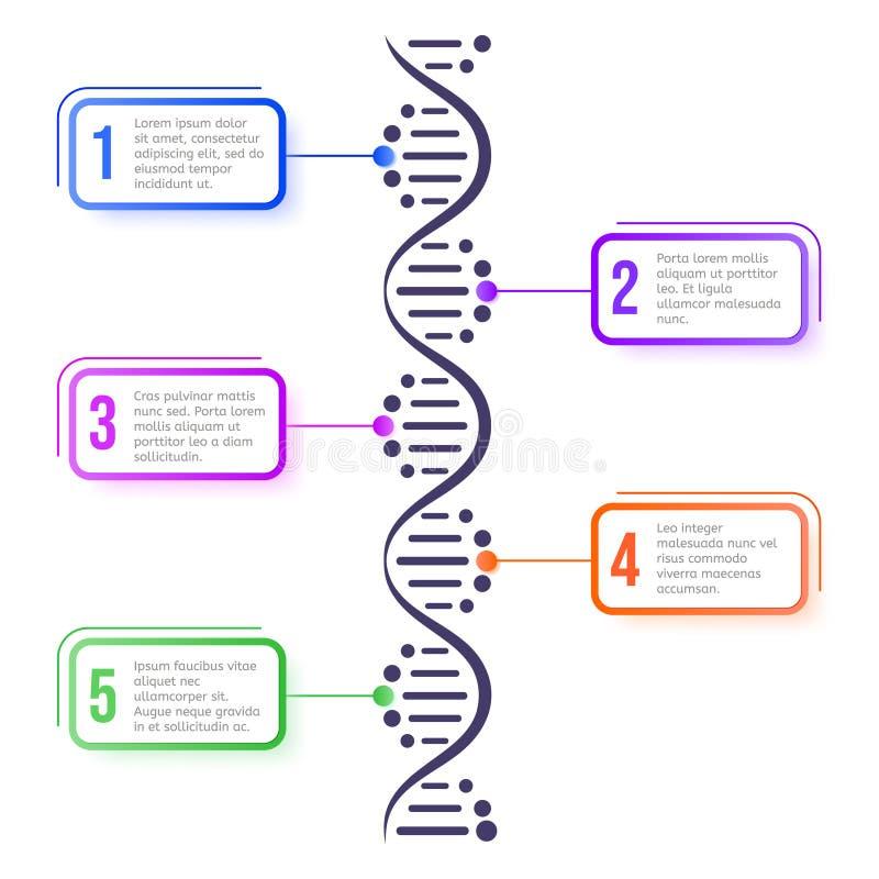 DNA分子概念 Abstract diagram, molecule helix spiral structure science scheme, biology genetic chromosome 向量例证