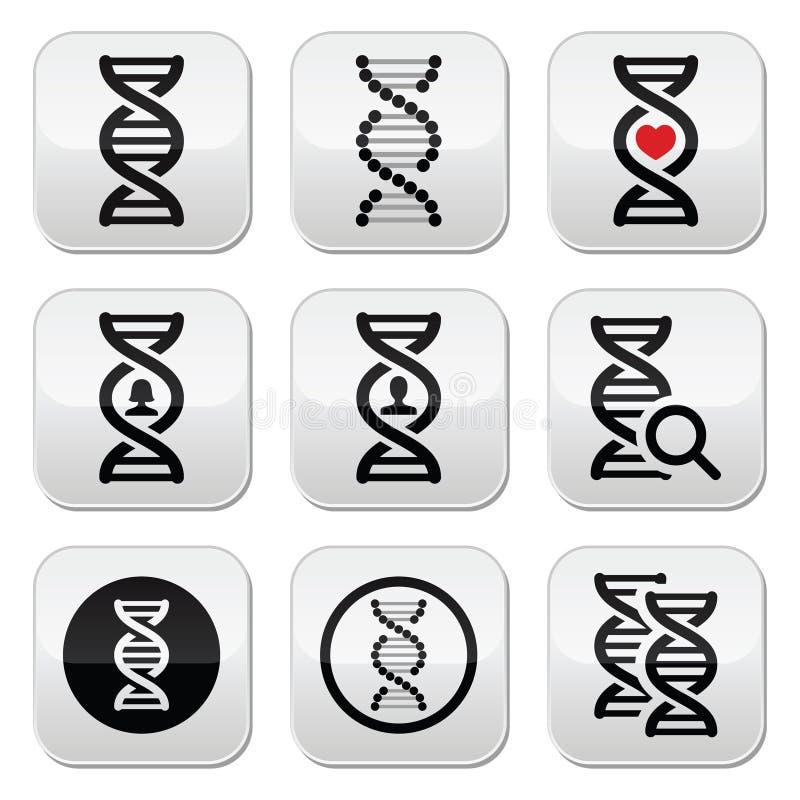 DNA, διανυσματικά κουμπιά γενετικής καθορισμένα διανυσματική απεικόνιση