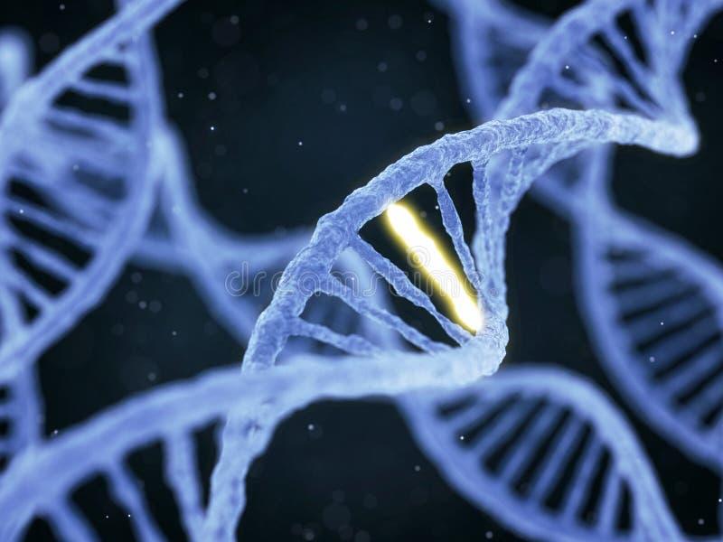 DNA με τη μοναδική σύνδεση διανυσματική απεικόνιση