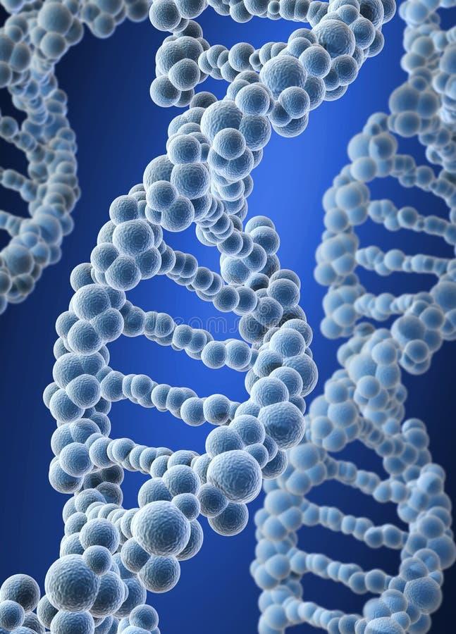DNA διανυσματική απεικόνιση