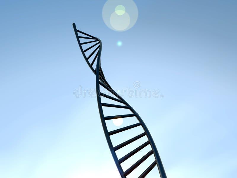 DNA 17 Arkivfoton