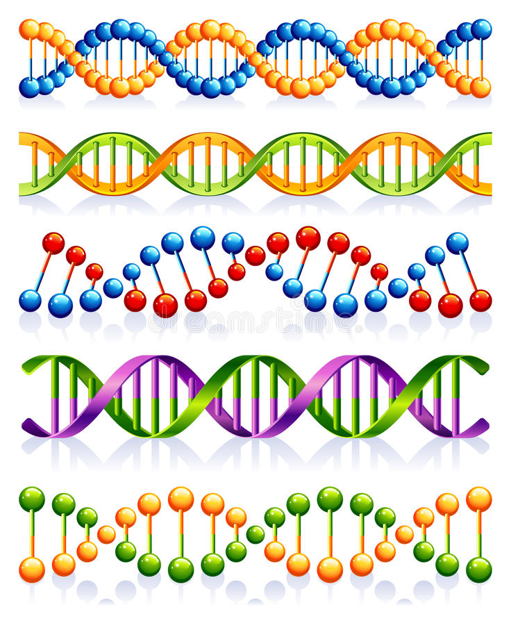 DNA. Vector illustration - DNA strands set