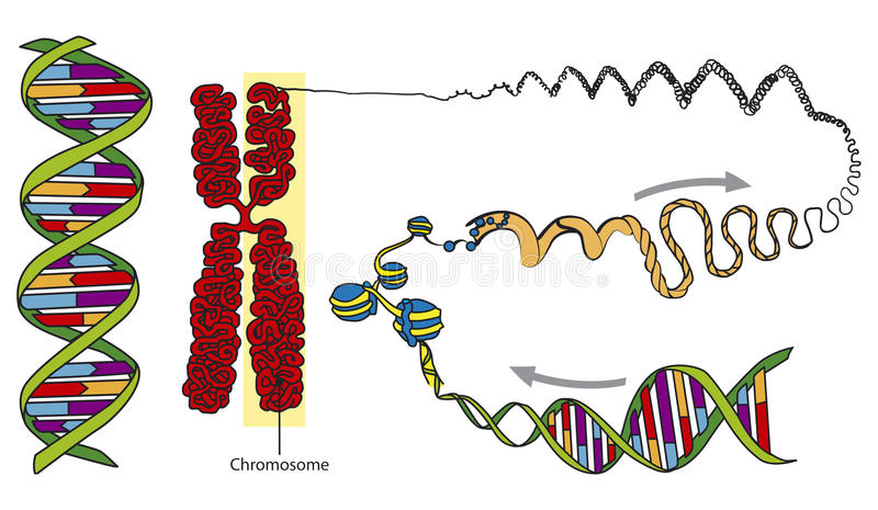 dna stock illustrationer