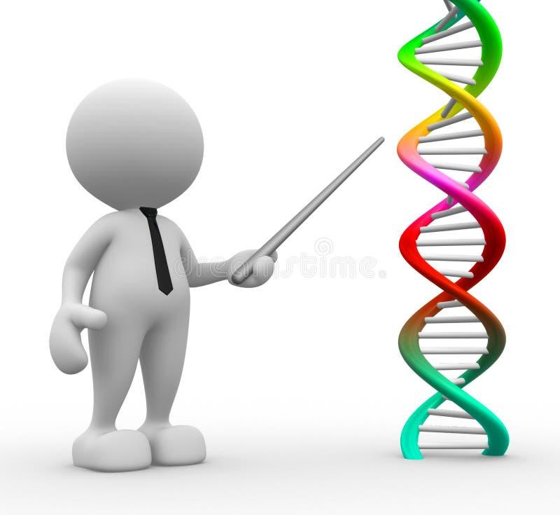 DNA ilustración del vector