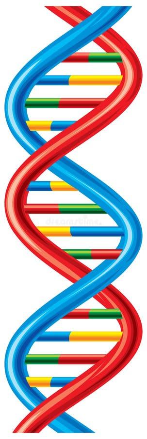 DNA. Vector DNA strand, scheme deoxyribonucleic acid