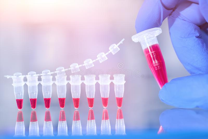 DNA amplification test and reaction mixture in gloved hand, scientific background, text space. DNA amplification test and reaction mixture in gloved hand royalty free stock images