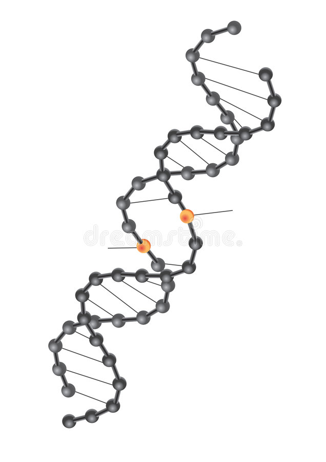 DNA break - vector. Crossed double Helix DNA break in white background, vector royalty free illustration