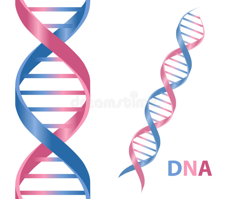 DNA. Cartoon icon isolated on white background stock illustration