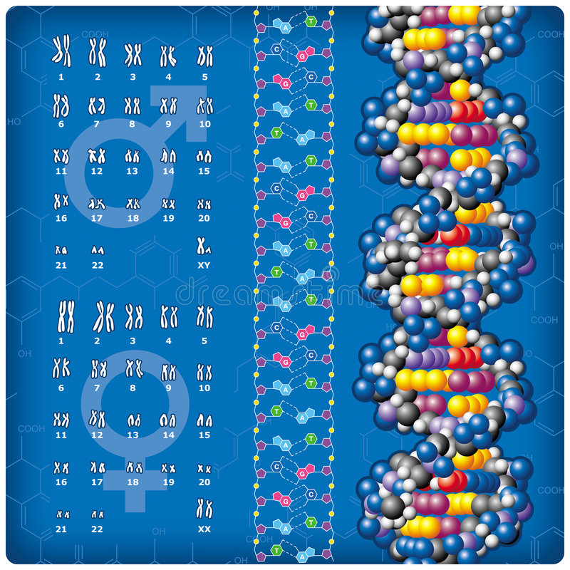 Download DNA and Caryotype stock vector. Illustration of color - 3900131