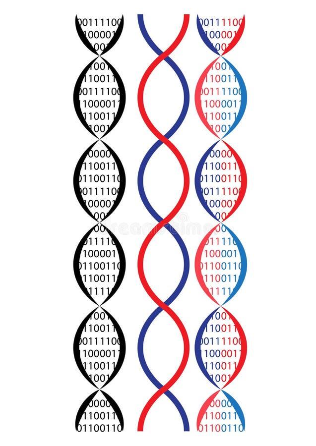 Dna chain. Vector illustration of dna chain, binary idea vector illustration