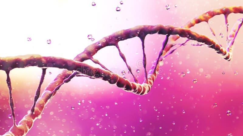 DNA-de schroef, Deoxyribonucleic zuur is een thread-like ketting van nucleotiden die de genetische instructies dragen die in de g royalty-vrije illustratie