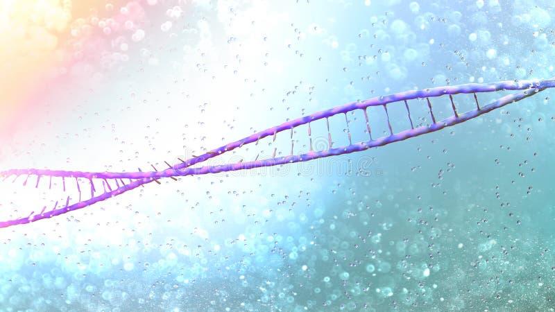 DNA, Deoxyribonucleic zuur is een thread-like ketting van nucleotiden die de genetische instructies dragen die in de groei, ontwi vector illustratie
