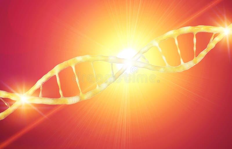 DNA, Deoxyribonucleic zuur is een thread-like ketting van nucleotiden die de genetische die instructies dragen in de groei, ontwi vector illustratie
