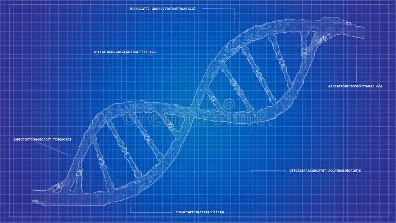 DNA die blauwdrukrna rangschikken die de computermodellen van DNA rangschikken royalty-vrije illustratie