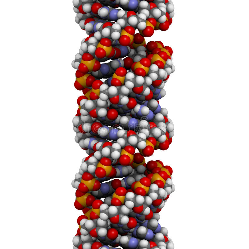DNA (A-DNA conformation) structure. DNA is the main carrier of genetic information in all organisms. The DNA shown here is in the rare and possible non-native stock illustration