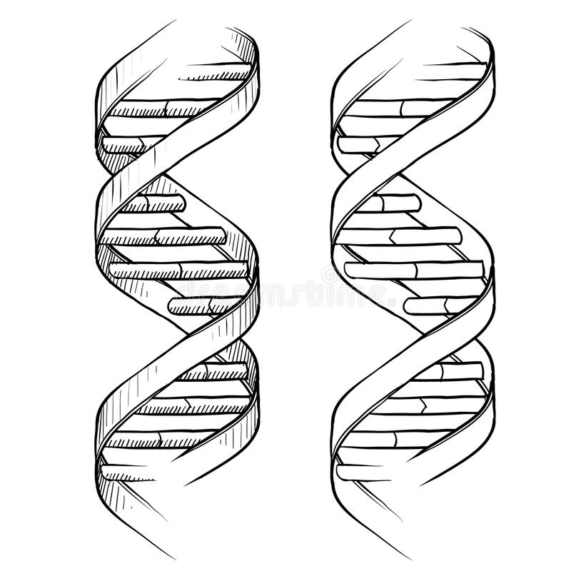 DNA-doppeltes Schneckenzeichnung vektor abbildung