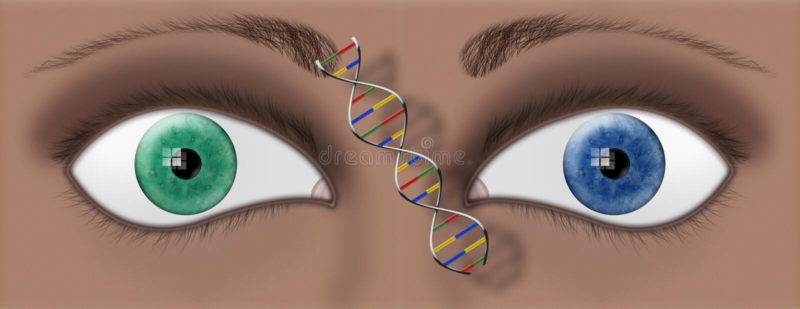 DNA EYES. Closeup of two different colored eyes and a DNA strand between the royalty free illustration