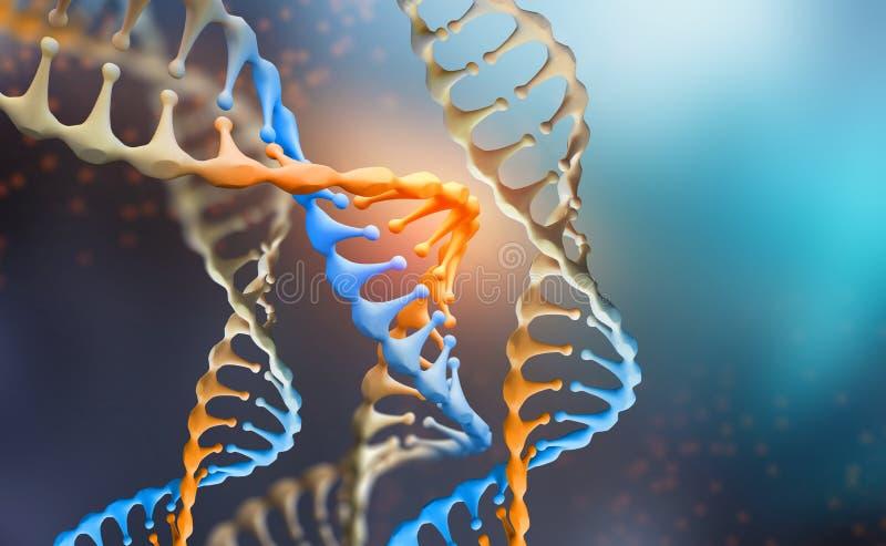 DNA-genoomonderzoek DNA-moleculestructuur 3D dubbele schroefillustratie stock illustratie