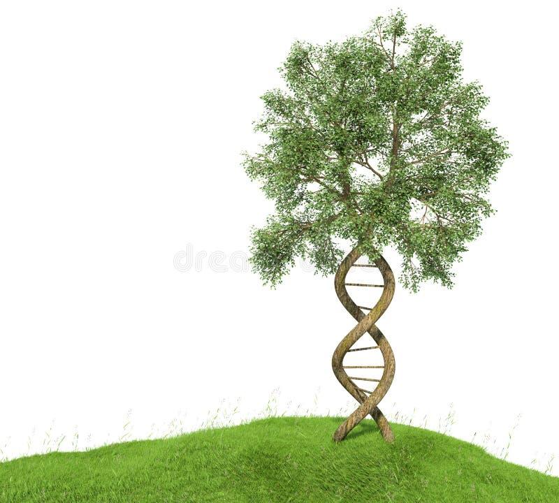 DNA gevormde boom met boomstammen die de dubbele schroef vormen royalty-vrije illustratie