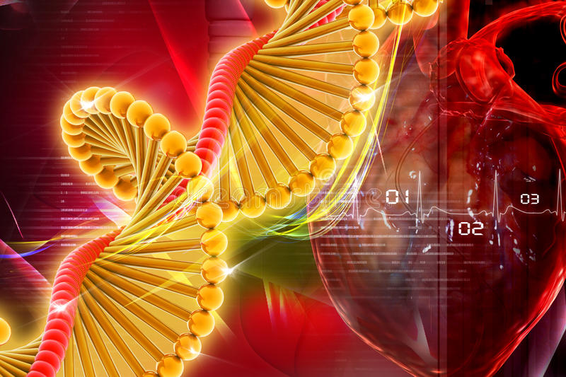 Dna with heart royalty free illustration
