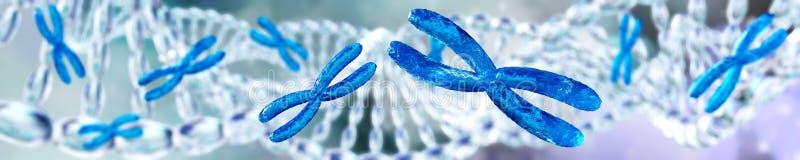 DNA helix chromosom ilustracja wektor