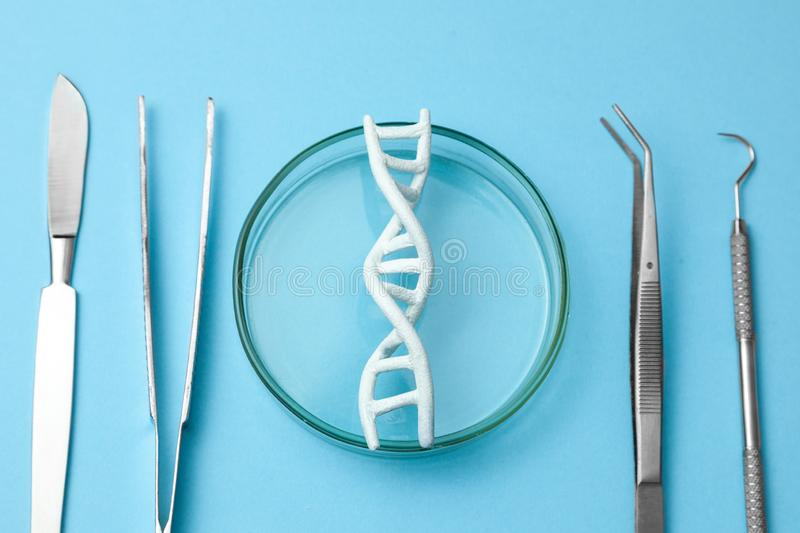 DNA helix research. Concept of genetic experiments on human biological code DNA. Medical instrument scalpel and forceps. stock photography