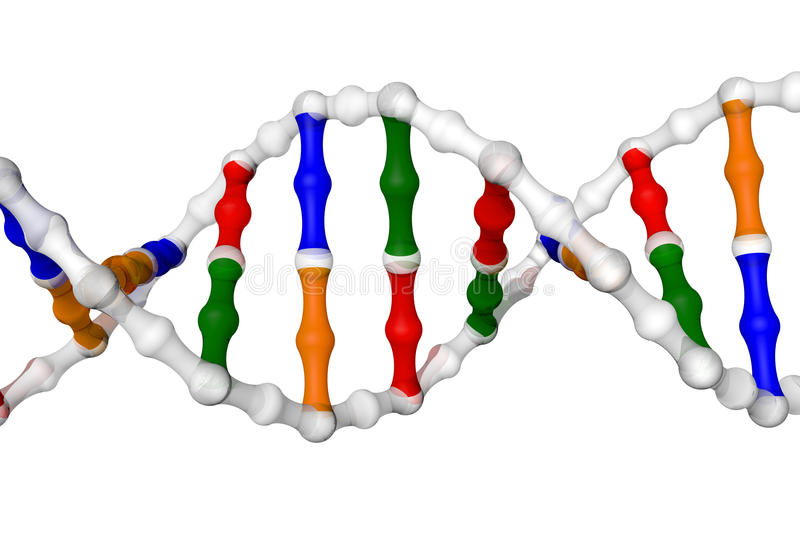 DNA helix (white background) royalty free illustration