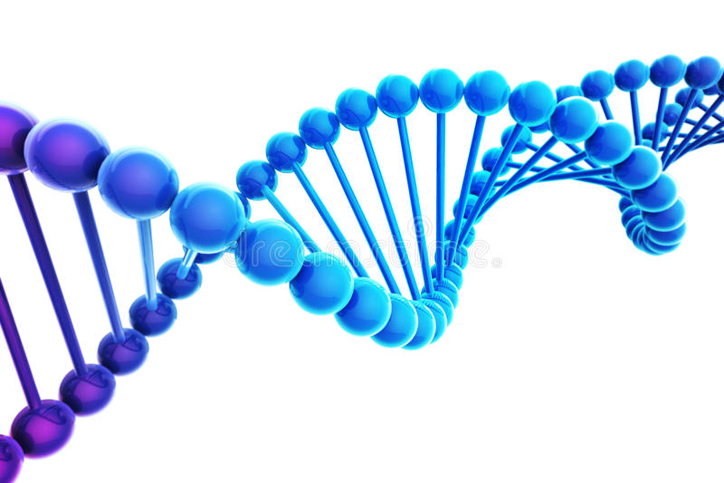 DNA Helix on white background vector illustration