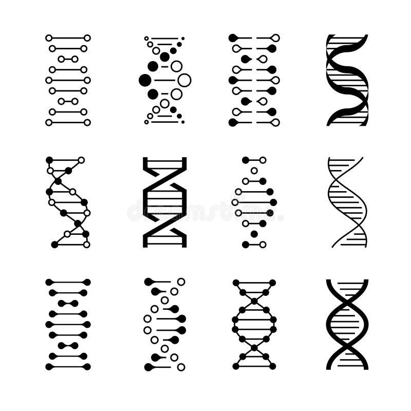 DNA-Ikonen Code der genetischen Struktur, DNA-Molekülmodelle lokalisiert auf weißem Hintergrund Genetische Vektorsymbole stock abbildung