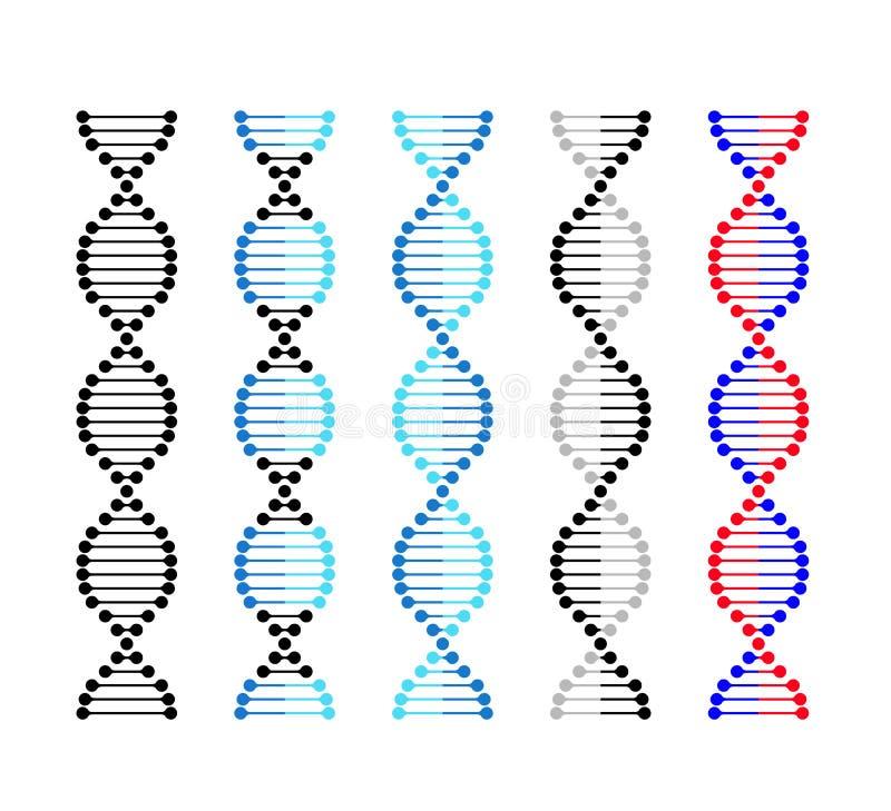 DNA-Ikonenchromosom-Genetikvektor stellte DNA-Genmolekülsatz des Vektors ein vektor abbildung