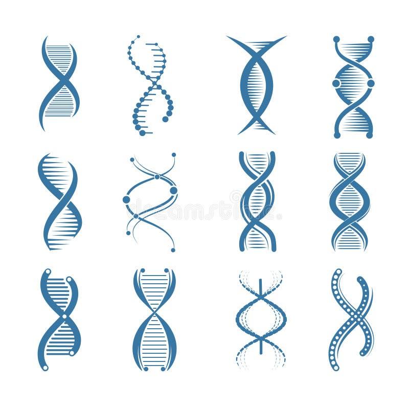 DNA ikony Genetycznych biologii struktury ludzkich medycznych naukowych przedstawicieli wektorowi symbole odizolowywający ilustracja wektor