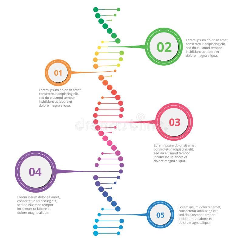 DNA infographic abstracta fotografía de archivo