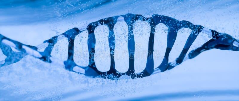 DNA-Kette in der Flüssigkeit umgeben durch transparente Luftblasen vektor abbildung