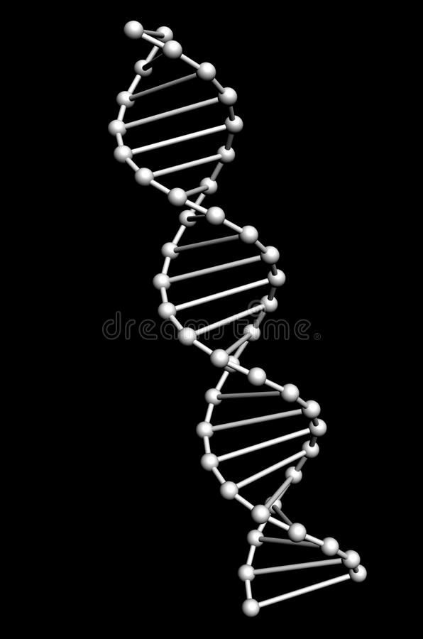 Dna model vector illustration