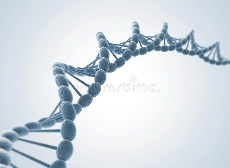 DNA model stock photos
