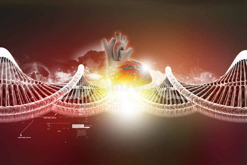 DNA-model met menselijk hart royalty-vrije illustratie
