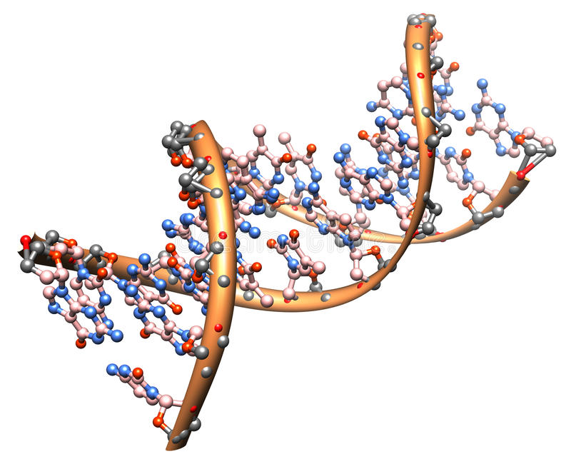 DNA molecule. Organic chemistry: model of the DNA molecule - illustration of a biological particle vector illustration