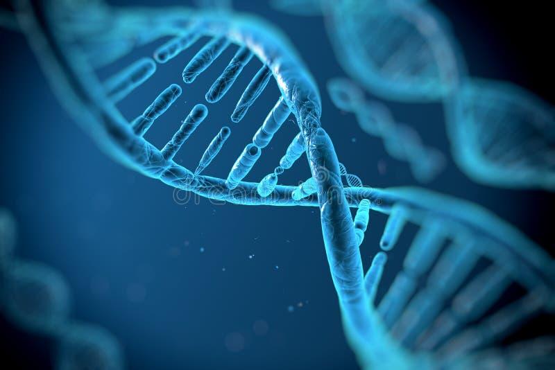 DNA-molecules