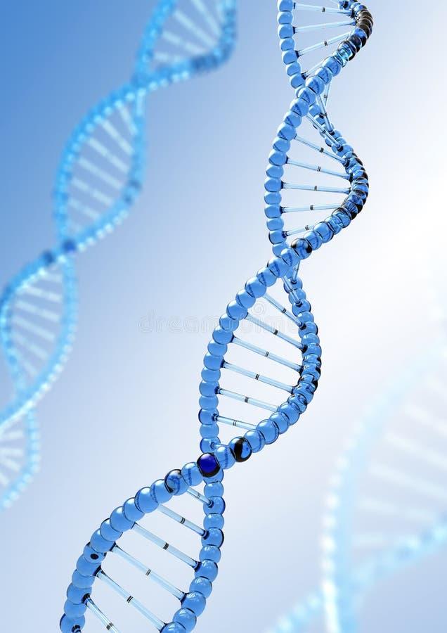 DNA-Molekül